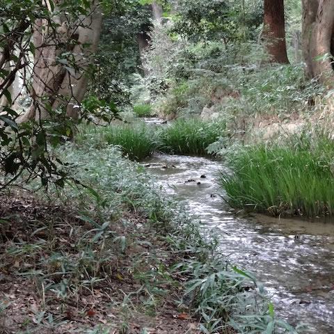 糺の森小川