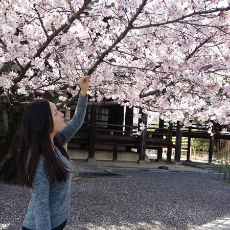 おけいこマルシェ_前日の桜